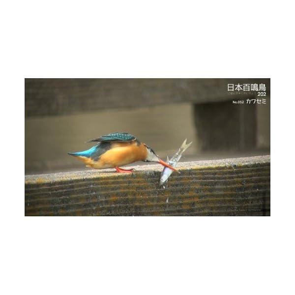 シンフォレストBlu-ray 日本百鳴鳥 2...の紹介画像11