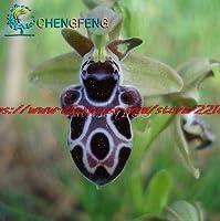 白:100種まれな花蜂の蘭の花の種笑顔の顔面白い花種フローラセミラミ蜂