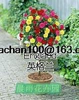 ローズタイプの色の木は、庭園のバルコニー100花の盆栽バラ鉢植え:陸軍緑