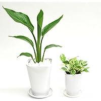 選べる観葉植物 陶器鉢2点セット(【4号】オーガスタ ×【3号】ポトスエンジョイ)