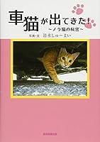 車猫が出てきた!  ~ノラ猫の秘密~