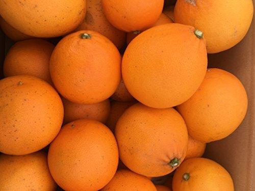 和歌山県産 ありあけオレンジ みかん 5キロ サイズS~L ご家庭用