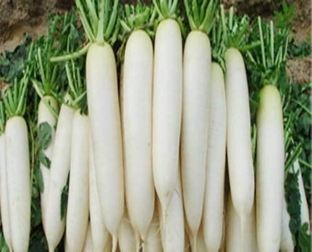 細菌接触発生種子パッケージ:4 PACKET OFSeed(パケットあたり400)SEED(MOOLI)野菜SEED(100 SEED X 4 PER PKTSパック)