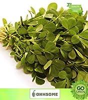 SEEDの野菜の種メティ-FenuギリシャのTrig Onella Foenum Graeceum-V Endayadm-S EEDシーズ - ????Pあたり屋内キッチン夏の種子メティFenuギリシャの種子Microgreens HomSEEDシード(20