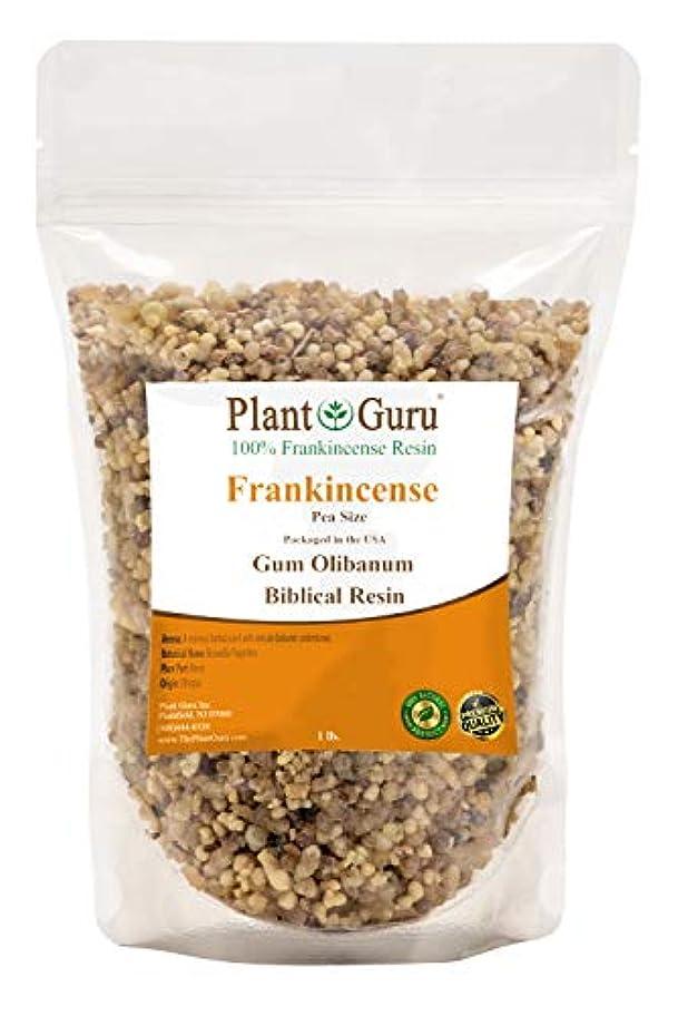 ラフト時制含意フランキンセンス 樹脂 1ポンド ピーサイズ 100% 天然 アロマ ロック お香 オリバナム ガム バルク
