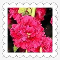 1:200ピース/バッグハイビスカスの種非常に香り高い鉢植えの花の種、ホームガーデン用盆栽植物の種
