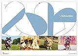 365カレンダー 2020年 チワワ カレンダー 壁掛け 卓上付き 2020-020
