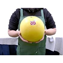 """熊本県八代特産 """"晩白柚"""" ばんぺいゆ 2Lサイズ 約2kg 秀品【予約 12月以降】"""