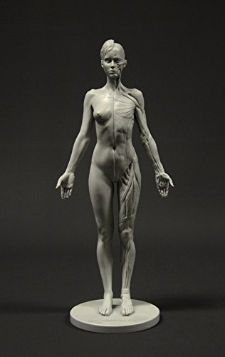 Female Anatomy Figure: 10.5-inch Anatomical Reference for Artists (Grey) 女性の解剖図