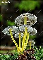 100ハッピーファームガーデン種子19個の場合/袋種子Succlent種子食用健康的なグリーン野菜の種を