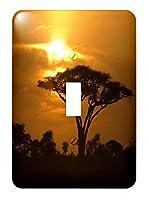 3drose LSP _ 173294_ 1Thorn Acacia傘ツリーon African Plains at Sunsetトロピカルナイトシーン–Single切り替えスイッチ