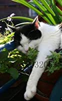 19:50個/袋盆栽アイリスの花Perennia花の種レア花の種子髭IR