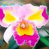 ライトイエロー:パック50個美しいパンジーの種子16種類ミックスカラーヴィオラ三色の花盆栽ポットミニプラントギフトDIYホーム&??ガーデン