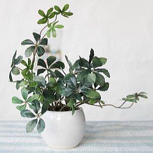 山久 プチグリーン アレンジ シュガーバイン 0910-8998 CT触媒加工 人工観葉植物 造花