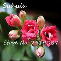 5:100種子/バッグ希少長寿種子美しい花の種カランコエ小説植物盆栽屋内ホームガーデン簡単に育てる