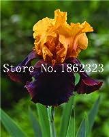 Virtue 100 pcs Iris Flower, Iris Orchid Bonsai, Rare Heirloom Perennial Flower Plant, Plant for Home Garden Purify The Air: 13