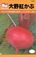 【種子】大野紅かぶ [1616]
