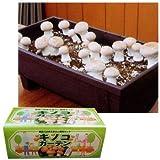 キノコガーデン(ブラウンマッシュルーム栽培キット)