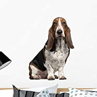 Bassett Hound 6 Years Wall Decal by Wallmonkeys Peel and Stick Graphic (24 in H x 20 in W) WM168655 [並行輸入品]