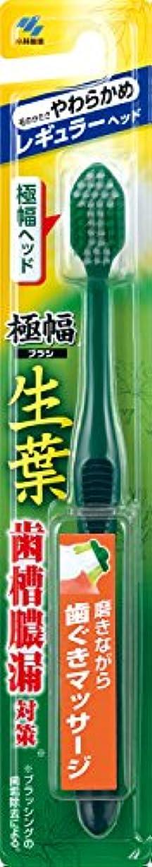 五フリルまで生葉(しょうよう)極幅ブラシ 歯ブラシ レギュラーヘッド やわらかめ