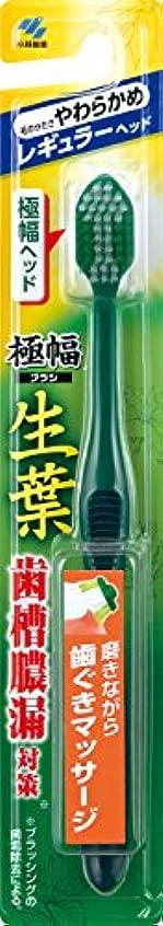 乳製品忠実なさまよう生葉(しょうよう)極幅ブラシ 歯ブラシ レギュラーヘッド やわらかめ