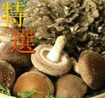 妙義 ナバファーム 【特選】 椎茸 (しいたけ)500g 【特選】 舞茸 (まいたけ)1株 詰め合わせ(合計約1kg)