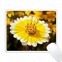 アメリカ、カリフォルニア州、クヤマカランチョ州立公園。類似イメージの検索入手可能性:きちんとヒントワイルドフラワーズ。 PC Mouse Pad パソコン マウスパッド