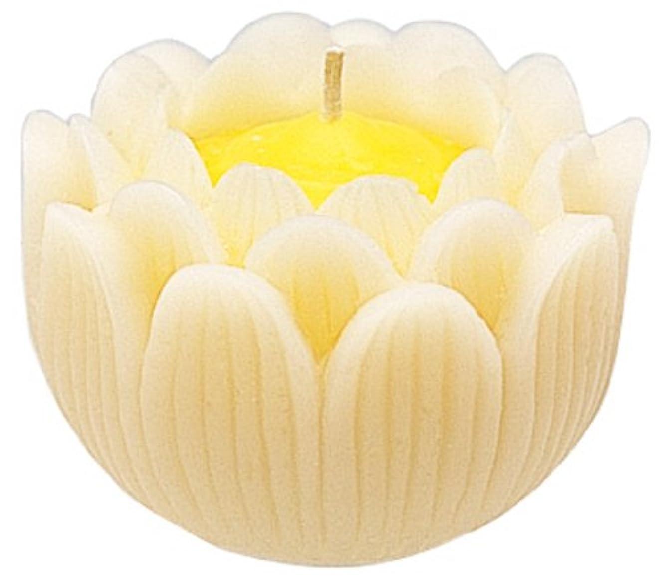 先のことを考える熟考するきれいにマルエス ろうそく 蓮の花 大 ホワイト 箱入り