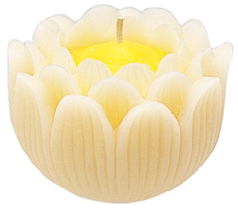 保護冷蔵する好奇心盛マルエス ろうそく 蓮の花 大 ホワイト 箱入り