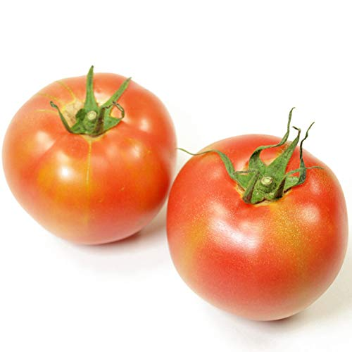 【おらがトマトケース】大野さんの味の濃いトマトです