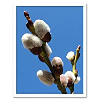 Spring Pussy Willow Buds Plant Art Print Framed Poster Wall Decor 12X16 Inch 春工場ポスター壁デコ