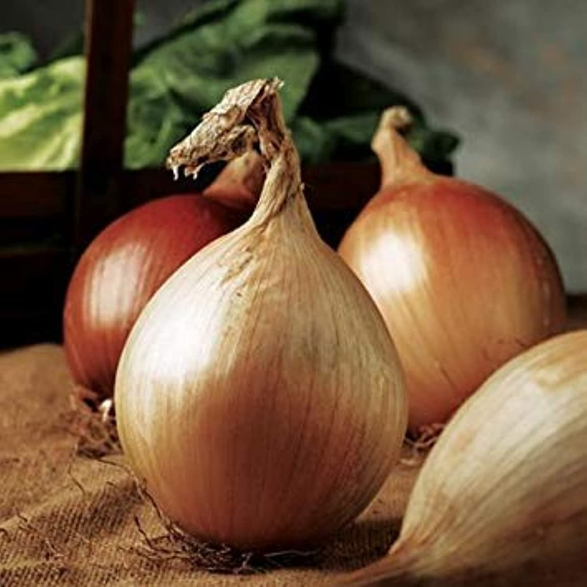 ガラガラめんどりびっくり種子パッケージ:ONION - アルサクレイグ島受賞者 - 200個の種子