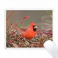 ナンディーナ北部枢機卿ヘブンリーバンブー、アメリカ、イリノイ州マリオン。 PC Mouse Pad パソコン マウスパッド