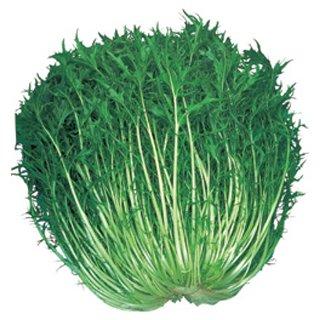 水菜 種 晩生千筋京水菜 小袋(約50ml)