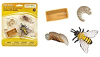 サファリ Science series Life Cycle Of A Honey Bee ( Set) 622716 (並行輸入)
