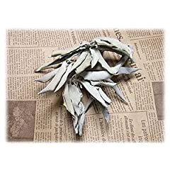 カリフォルニア産 オーガニック 浄化用 ホワイトセージ(葉+茎タイプ) 100g