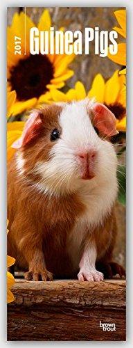 Guinea Pigs 2017 Slim Calendar