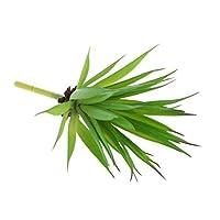 SONONIA  2個入り 緑 人工ジューシー プラスチック製 植物 リーフ 観葉植物 家 庭 風景 装飾