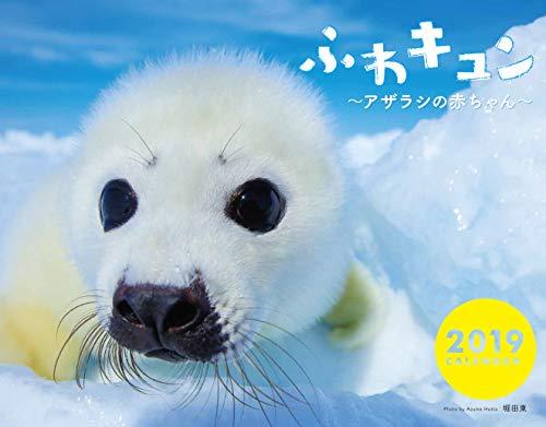 ふわキュン~アザラシの赤ちゃん~カレンダー2019
