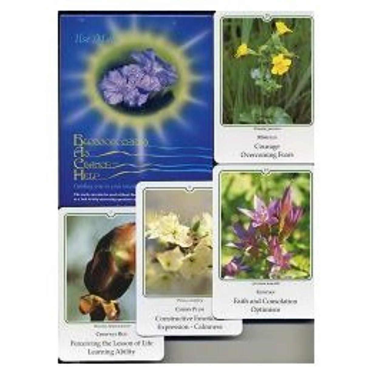 過去知性予報写真カードセット(38種)英語版