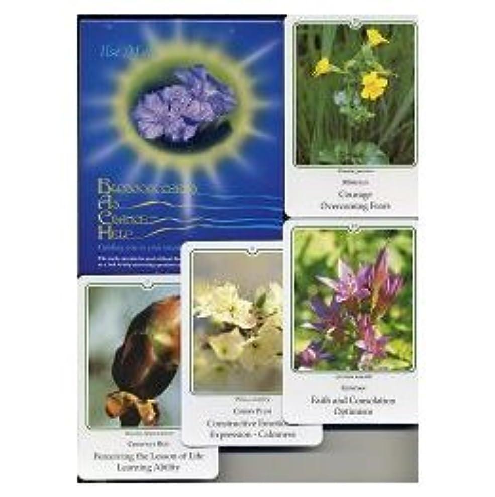 血統ほとんどの場合エレメンタル写真カードセット(38種)英語版