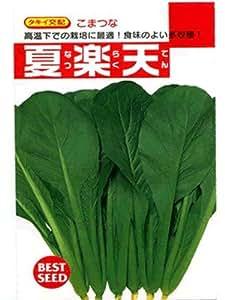 夏楽天 タキイ 小松菜種