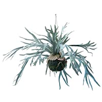 人工観葉植物 ビカクシダハンキングボール60(2個セット) bb160 吊るしタイプ (代引き不可) インテリアグリーン 造花 HANGING