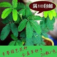 20種/パック盆栽のOFSバルコニー盆栽種子Bashfuls種子種子