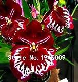 新参者!!!送料無料苗の50pcs /袋25種類の美しいヴィオラトリコロールシードパンジーの花の種子盆栽鉢植え植物