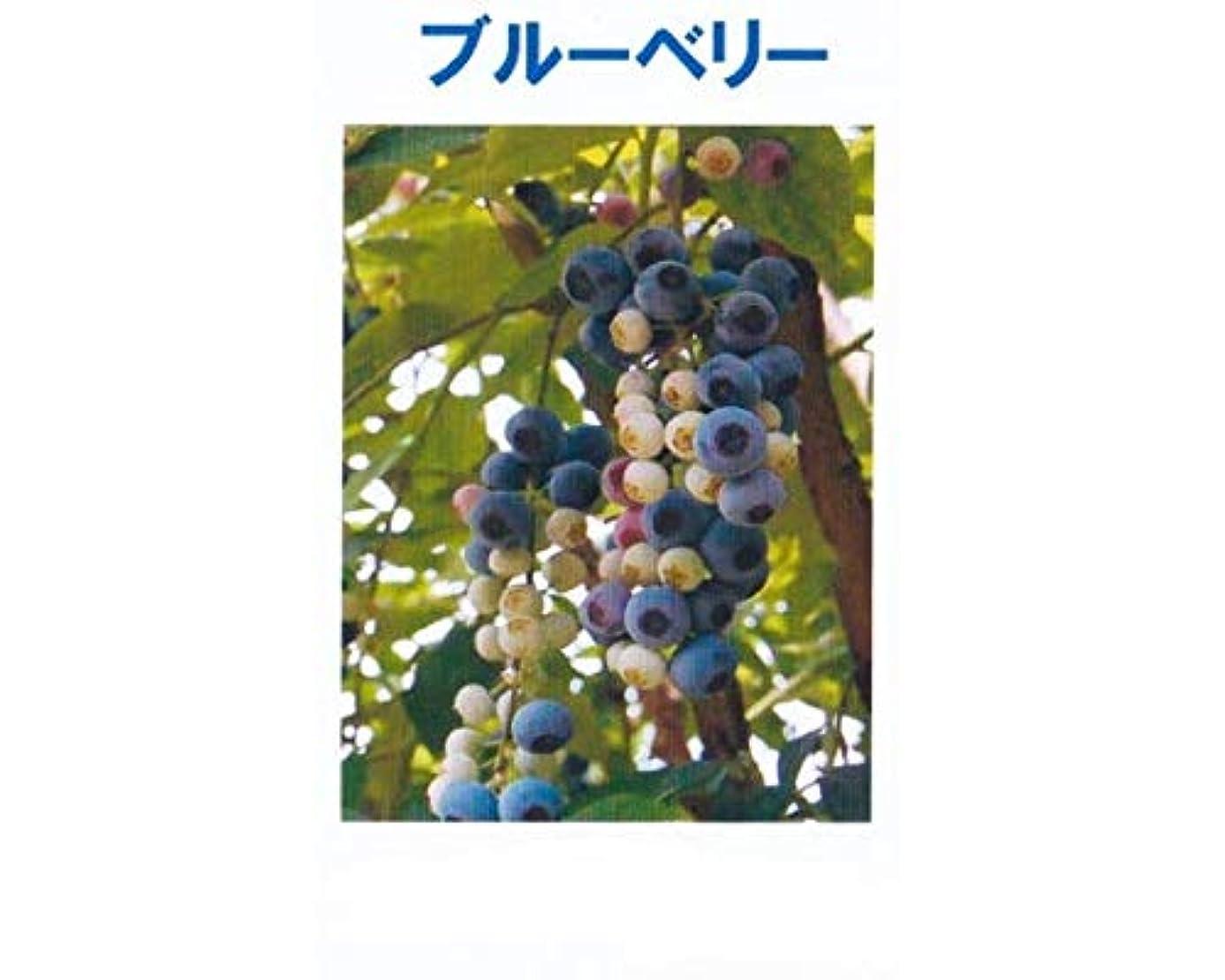 ジュニア設計図樹皮アロマオイル ブルーベリー 5ml エッセンシャルオイル 100%天然成分