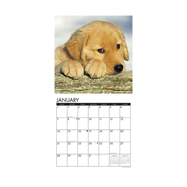 Just Golden Puppies 201...の紹介画像3