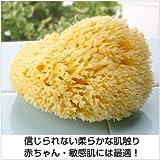 天然海綿スポンジ(ハニコム種/全身用LLサイズ16cm)