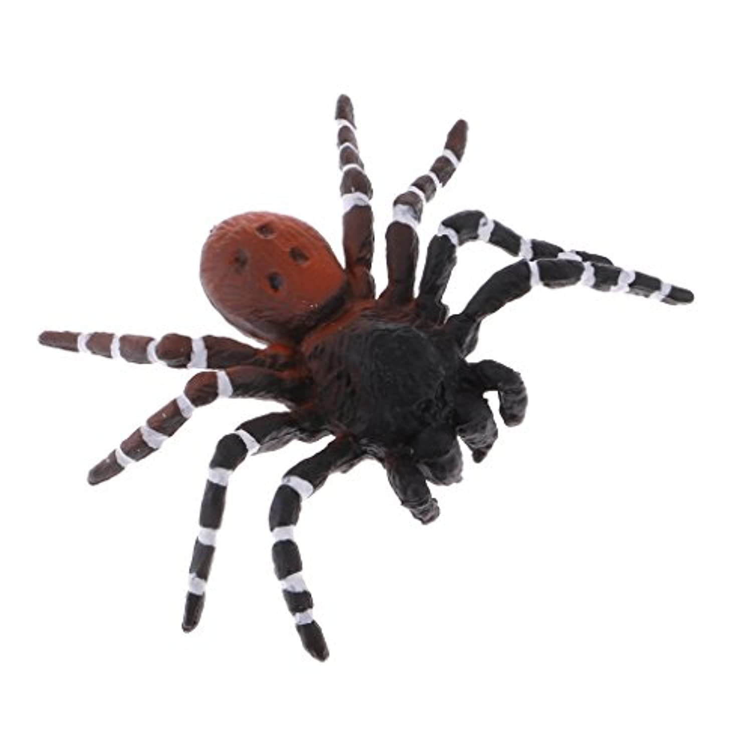 MagiDeal Realistic Science Plastic Animal Model Figure Brazilian Red Spider Figurine Children Kids Educational Toy Home Decoration Collectibles Kids Story Telling Props