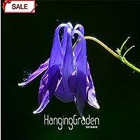 5:熱い販売!珍しい赤い白鳥の花の種バルコニーガーデン開花植物100種子/ロット、#Ywbfcx